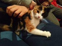 [Katzenpropagandapost] FKR begrüßt neues vierbeiniges Mitglied